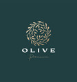 olive wreath sophisticated aesthetic logo icon vector image vector image