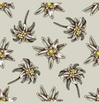 seamless pattern with hand drawn colored edelweiss vector image