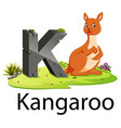 zoo animal alphabet k for kangaroo vector image