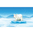 A white bear standing above the iceberg vector image