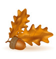 autumn oak acorns with leaves vector image vector image