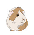 guinea pig color vector image vector image