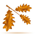 autumn oak leaves vector image vector image