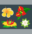 beautiful tropical flower set design summer plants vector image vector image