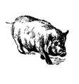 domestic pig vector image
