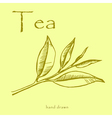 Green tea plant leaves Hand drawn herbal in sketch vector image vector image