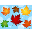 Seamless maple leaves fall colors pattern over vector image vector image