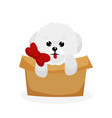 bichon frise puppy vector image vector image