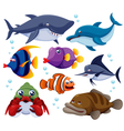 Fish sea set vector image vector image