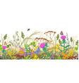 seamless border with autumn meadow plants and vector image vector image