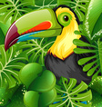 Toucan in the green bush vector image vector image