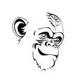 head angry chimp vector image