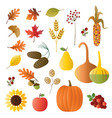 autumn fruit and foliage vector image vector image