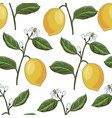 drawing seamless pattern with lemon branch vector image
