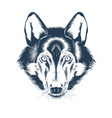 portrait wolf head on white background vector image vector image