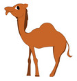 a camel with big eyes or color vector image vector image
