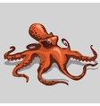 Orange octopus closeup isolated vector image