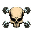 sport emblem with skull and crossed barbells vector image