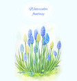 viper onion mouse hyacinth or muscari watercolor vector image