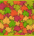 autumn maple leaves vector image vector image