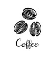 coffee beans ink sketch vector image vector image
