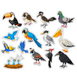Sticker set with many types of birds vector image vector image