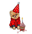 pomeranian toy dig dressed in birthday hat vector image vector image