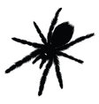 Big Spider silhouette vector image vector image