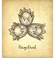 ink sketch of hazelnut vector image vector image