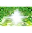 Summer fresh leaf green leaves with sun rays vector image vector image