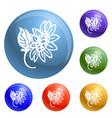 organic sunflower icons set vector image