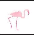pink flamingo stands on thin legs on a white vector image