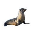 sea lion seal from a splash watercolor vector image vector image