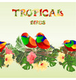 seamless border tropical birds on a branches vector image vector image