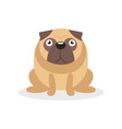 cute angry pug dog character pet dog cartoon vector image vector image