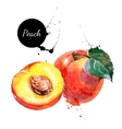 Hand drawn watercolor painting peach on white vector image vector image