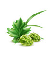 realistic hop cone with green leaves vector image
