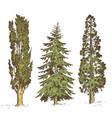 set hand drawn trees italian cypress and stone vector image vector image