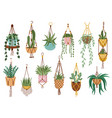 plant in hanging pots houseplant hang on rope vector image vector image
