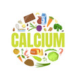 calcium banner template with high calcium food vector image