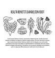 dandelion health benefits medical vector image vector image