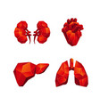 red low poly human internal organs set vector image