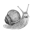 Snail Engraving vector image vector image