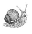 Snail Engraving vector image