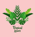 tropical leaves palm tree jungle foliage vector image vector image