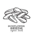 hand drawn sunflower seeds vector image