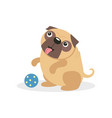 cute pug dog character playing with a ball pet vector image vector image