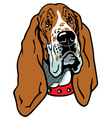 head of basset hound vector image vector image