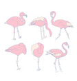a set of sketches of pink flamingos vector image vector image