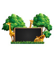 blackboard with wild giraffes in park vector image vector image